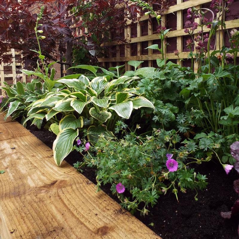Aubergine Garden