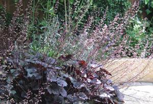 Planting Garden Design in Whitstable